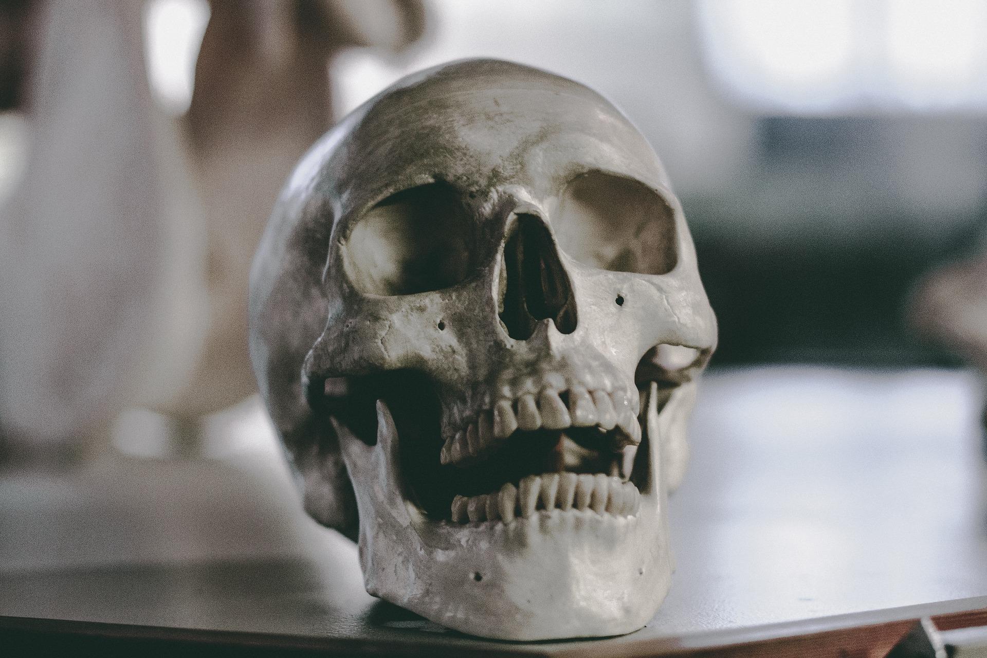 skull-2589974_1920